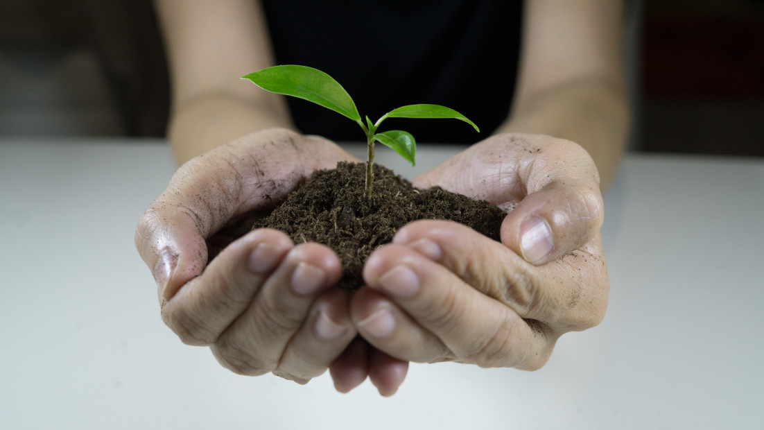 womans hands holding a plant growing out of the ground green seedling growing from soil ecology t20 jxv92z