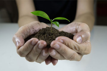 womans hands holding a plant growing out of the ground green seedling growing from soil ecology t20 jXV92z 1024x576 1